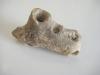 fossile-bord-de-loire-1